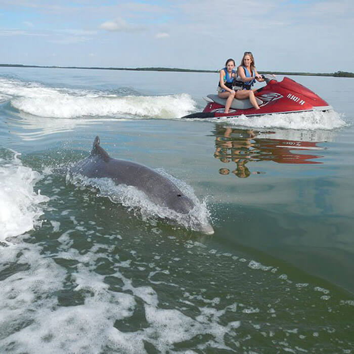 Guests enjoy a dolphin adventure tour in Fort Myers Beach
