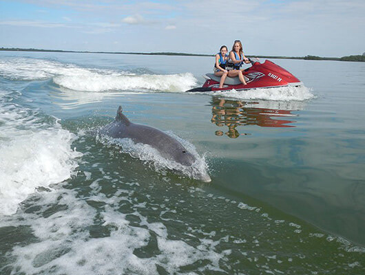 Dolphin tour in Fort Myers Beach